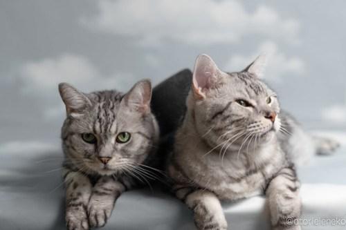 アトリエイエネコ Cat Photographer 44570387671_acb1133052 1日1猫!「かりぐらしの猫たち」さんのシェルターへ行って来た♪(1/2) 1日1猫!  里親様募集中 猫写真 猫 子猫 大阪 吹田 初心者 写真 保護猫 ニャンとぴあ スマホ カメラ かりぐらしの猫たち Kitten Cute cat