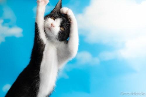 アトリエイエネコ Cat Photographer 43514463165_ca27187b50 1日1猫!なら地域ねこの会さんの猫撮影会♪ 1日1猫!  猫写真 猫カフェ 猫 子猫 奈良 大阪 初心者 写真 保護猫カフェ 保護猫 ハチワレ ニャンとぴあ スマホ キジ猫 カメラ なら地域ねこの会 Kitten Cute cat