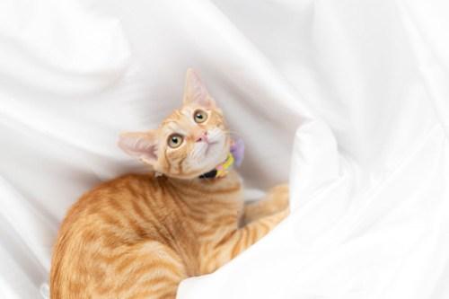 アトリエイエネコ Cat Photographer 42470638300_7ee54763de 1日1猫!ねこといぬのおうちさがし@和泉市今岡動物病院(8/26)に行ってきた♪1/2 1日1猫!  里親様募集中 猫写真 猫カフェ 猫 子猫 大阪 和泉ねころじの会 初心者 写真 保護猫 保護犬 ニャンとぴあ スマホ キジ猫 カメラ この子のあした Kitten dog Cute cat