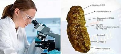 Kandungan Dalam QnC Jelly Gamat Yang Bermanfaat Besar Bagi Prostat