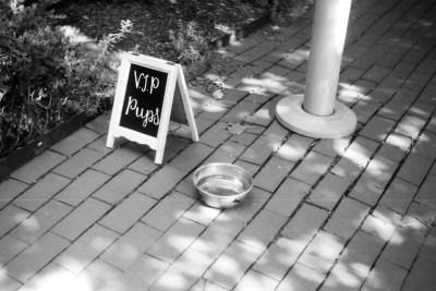 VIP Pups