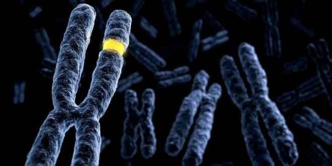 20000-gènes-humains