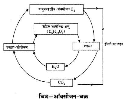 UP Board Solutions for Class 9 Science Chapter 14 Natural Resources l 4