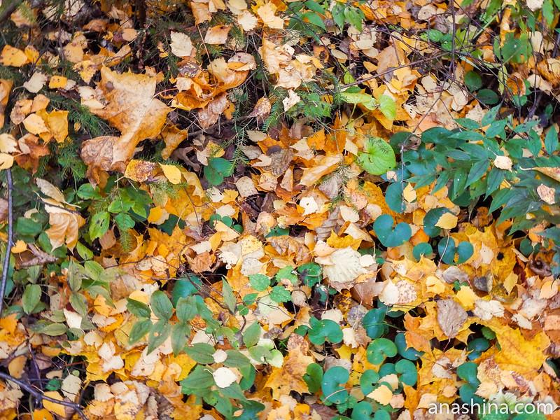 Опавшие листья, Московская область