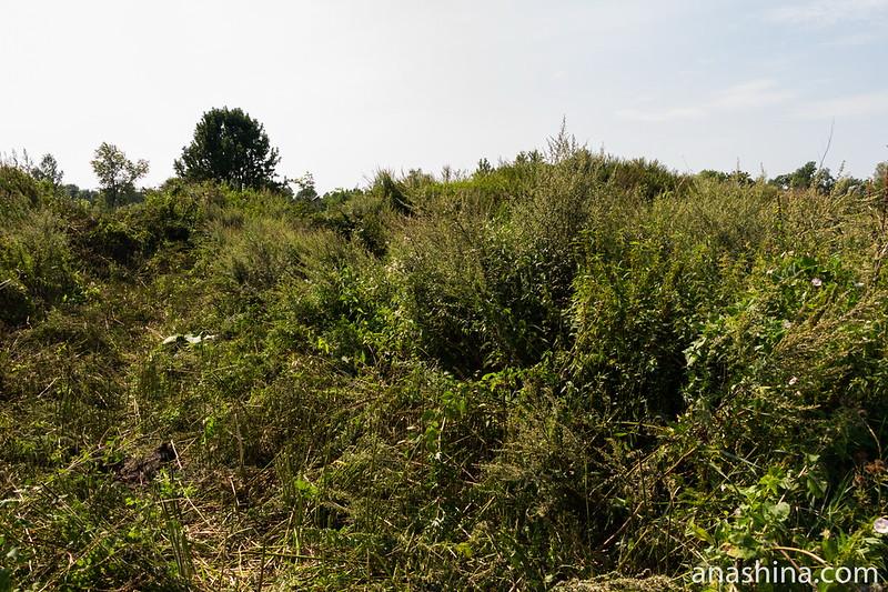 Бывший раскоп, Старая Ладога