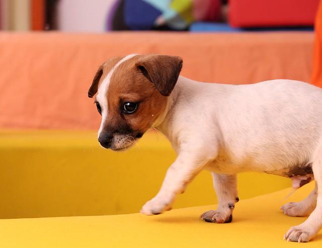 咳の原因がわかていない子犬