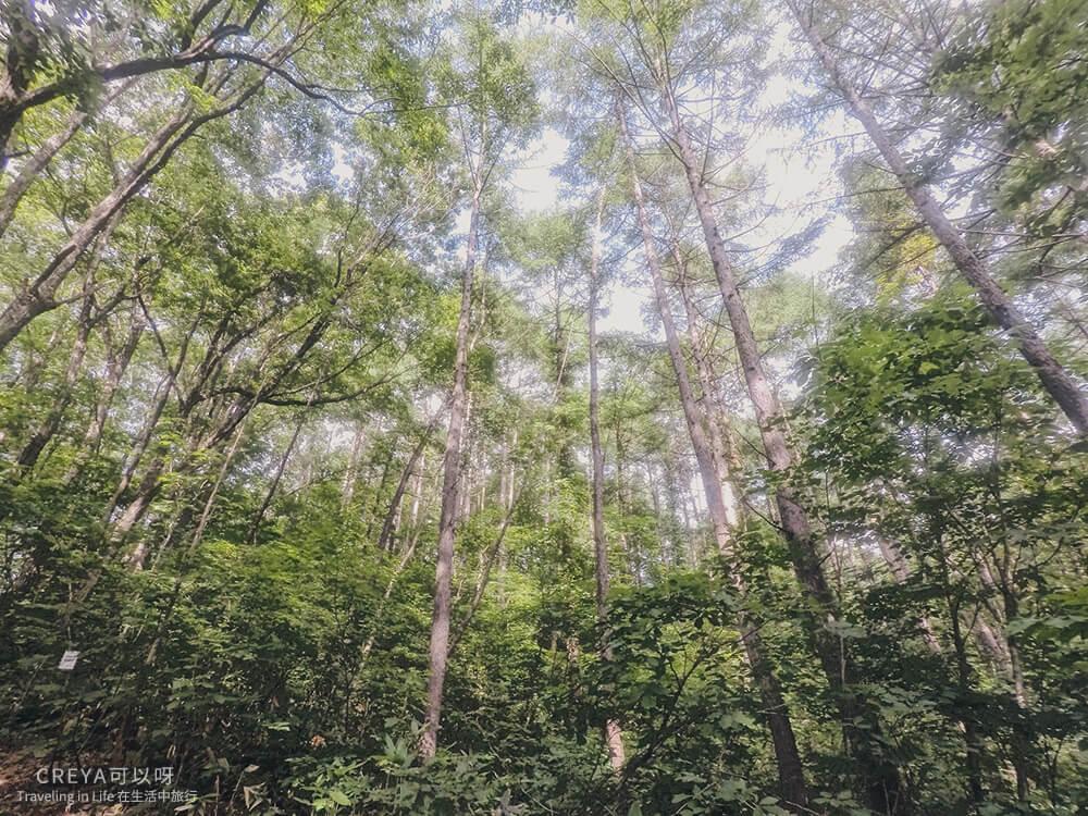20181018   行走在日本東北   治癒之森的一堂生命課程,健行在自然首都的福島只見町 25.jpg