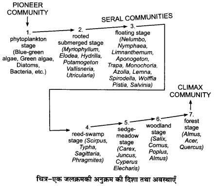 UP Board Solutions for Class 12 Biology Chapter 14 Ecosystem 3Q.2.2