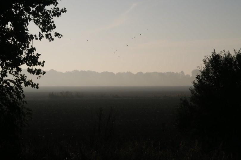 Morgennebel 4