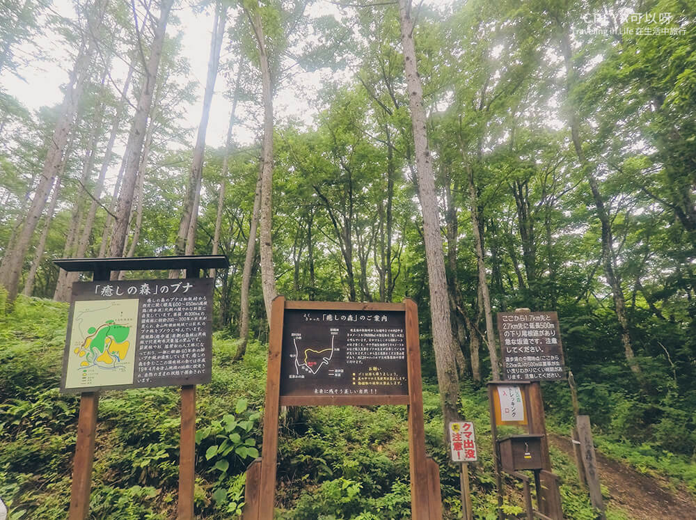 20181018 | 行走在日本東北 | 治癒之森的一堂生命課程,健行在自然首都的福島只見町 07.jpg