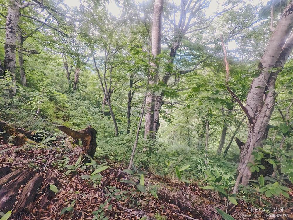 20181018 | 行走在日本東北 | 治癒之森的一堂生命課程,健行在自然首都的福島只見町 24.jpg