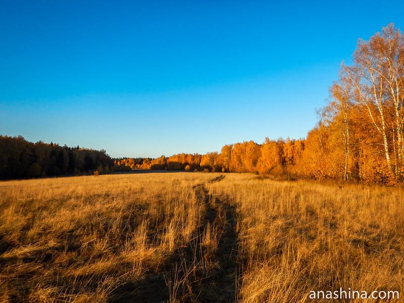 Протасовское поле, Московская область