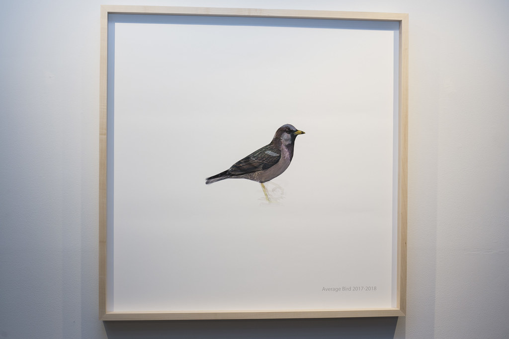 All The Birds I Saw Last Year @ Central Art Garage