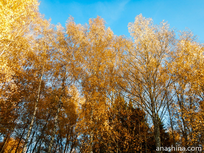 Золото листвы