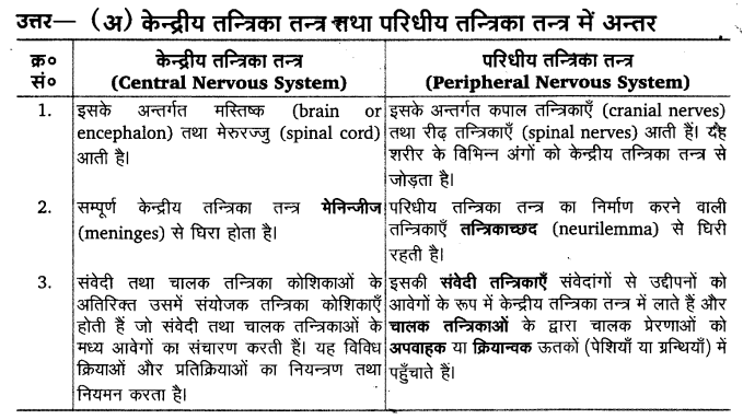 UP Board Solutions for Class 11 Biology Chapter 21 Neural Control and Coordination 5