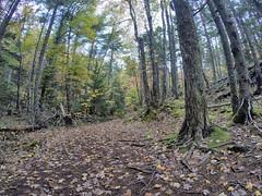 Fox Lake Trail - Kearney Lake Trail System