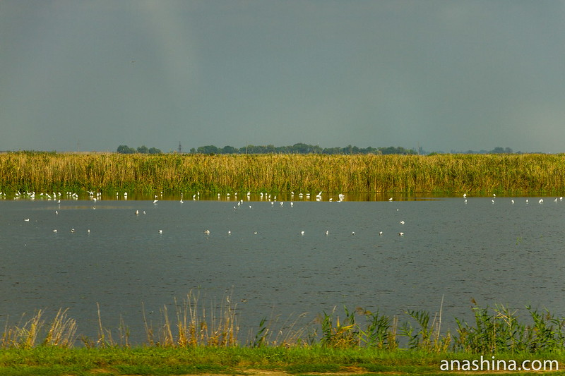 Водоем с птицами, Краснодарский край