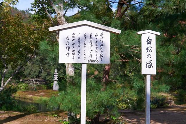 金閣寺 白蛇