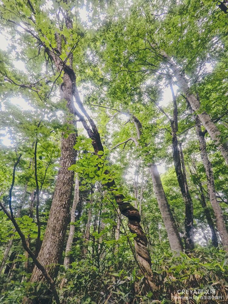 20181018 | 行走在日本東北 | 治癒之森的一堂生命課程,健行在自然首都的福島只見町 18.jpg