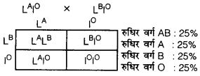 UP Board Solutions for Class 12 Biology Chapter 5 Principles of Inheritance and Variation 4Q.2.6