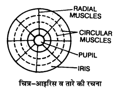 UP Board Solutions for Class 11 Biology Chapter 21 Neural
