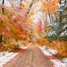 """Seasons Collide"" Hiawatha National Forest"