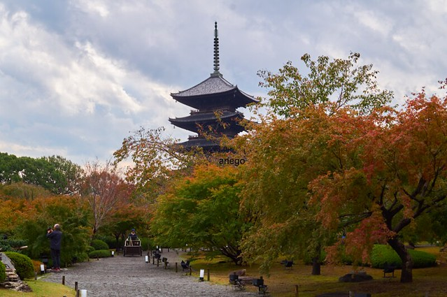 東寺 五重の塔と紅葉