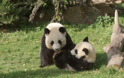 1-year-old Yuan Meng and mom Huan Huan 2018-10-16