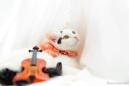 アトリエイエネコ Cat Photographer 44165465054_382dd2faec 1日1猫!高槻ねこのおうち 里活中のみなみちゃん♪ 1日1猫!  高槻ねこのおうち 里親様募集中 猫写真 猫カフェ 猫 子猫 大阪 初心者 写真 保護猫カフェ 保護猫 スマホ カメラ Kitten Cute cat