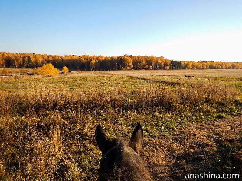 Поле около конюшни, КСК Славино
