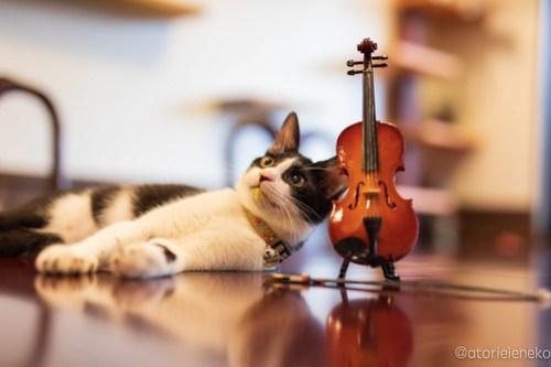 アトリエイエネコ Cat Photographer 44427099514_11286b442b 1日1猫! CaraCatCafeさん里活中のお静ちゃん!(2/3) 1日1猫!  里親様募集中 猫写真 猫カフェ 猫 子猫 大阪 初心者 写真 保護猫カフェ 保護猫 ハチワレ キジ猫 カメラ Kitten Cute cat caracatcafe