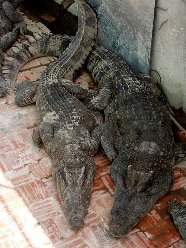 cambodia2012 (29)