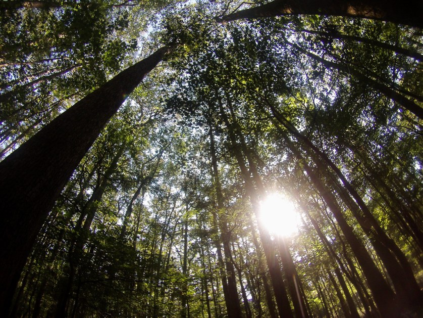 Congaree National Park is Home to the Largest Intact Expanse of Old-Growth Bottomland Hardwood Forest in the Southeastern United States.
