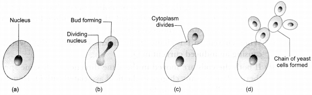 CBSE Sample Papers for Class 10 Science Paper 7 11