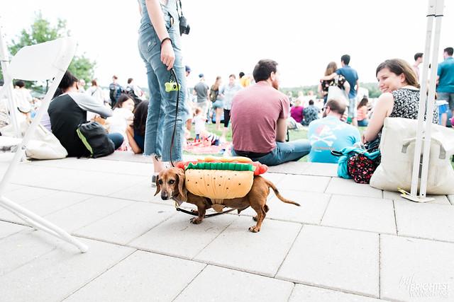 Wiener 500