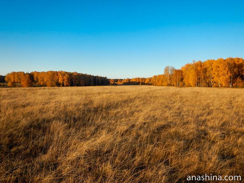 Протасовское поле, Московская область, городской округ Мытищи