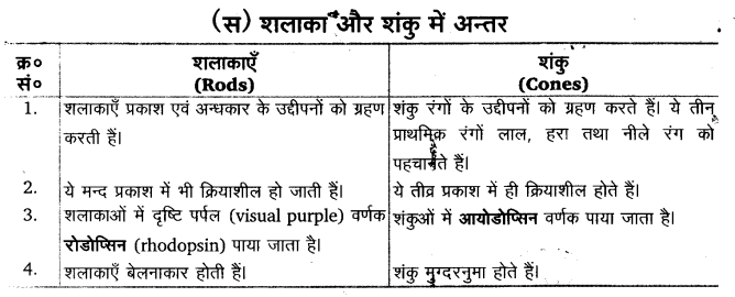 UP Board Solutions for Class 11 Biology Chapter 21 Neural Control and Coordination 20