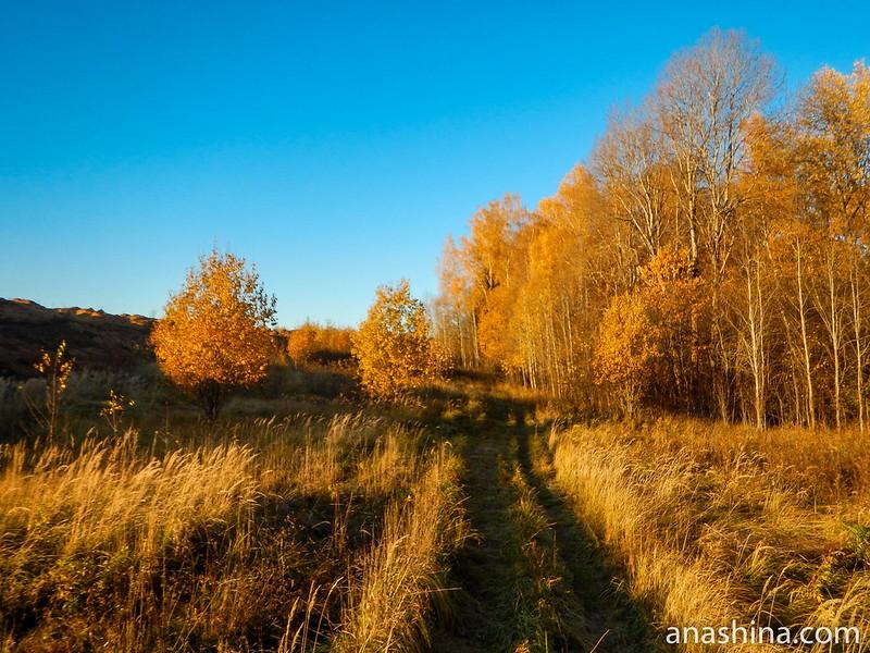 Полевая дорожка между карьером и лесом, Московская область, городской округ Мытищи