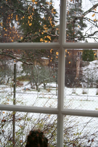the first snow - 3 nov