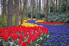 Tulip Garden Path, Keukenhof