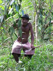 Planteur de vanille dans le Loky Manambato