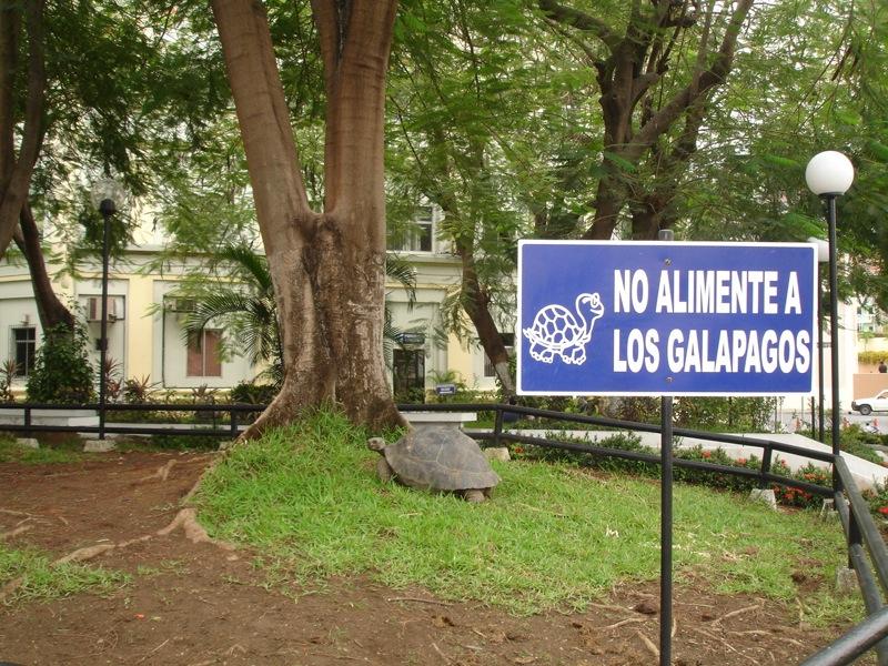 No alimente a los Galápagos - ESPOL ESPAE