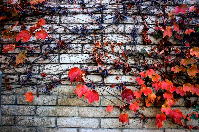 Fall on Wall