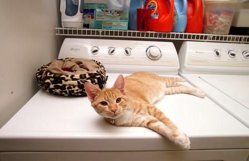 I love laundry day by Capt Kodak.