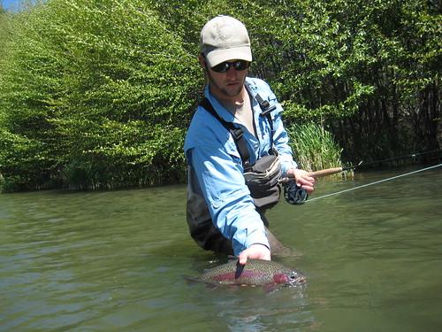 Deschutes River wild Rainbow Trout
