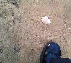 shellsand.jpg
