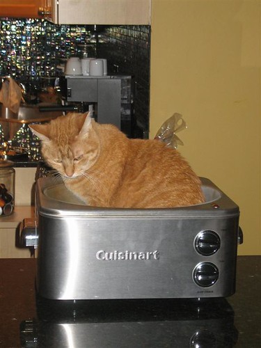 Cat in Pot