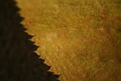 Leaf2b