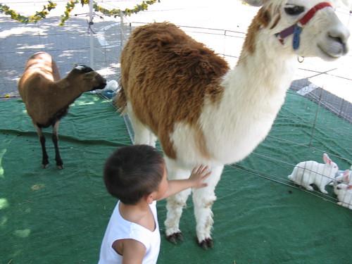 Aaron and the Alpaca