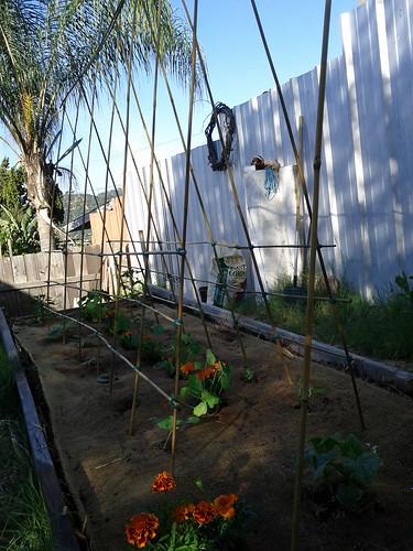 Squash Ladders by Veronica in LA